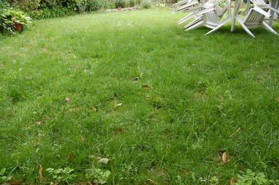refaire sa pelouse