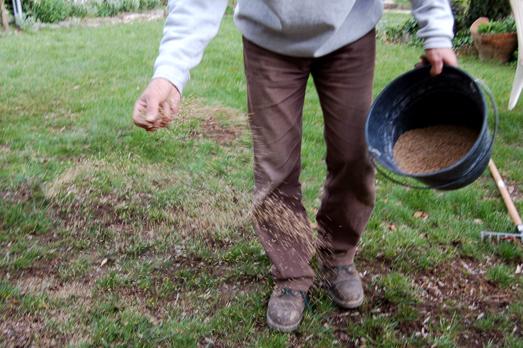 Como cuidar do relvado-fertilização da relva