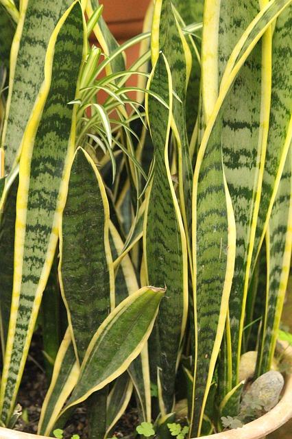 plante verte facile d'entretien.