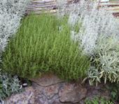 plantes jardin sec