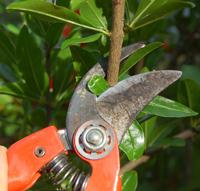 taille sécateur - conseils jardinage